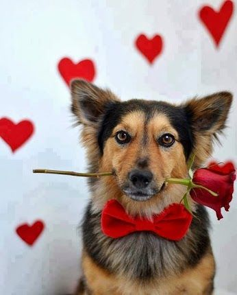 It S Valentine S Day Tomorrow Don T Forget To Treat Your Pooch Www
