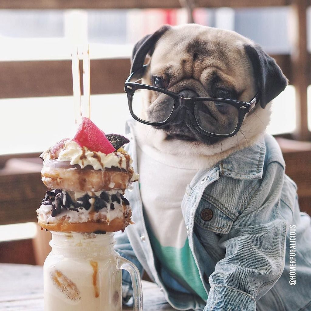 Pug Food Puppy Dog Pictures Puppies Funny Pugs
