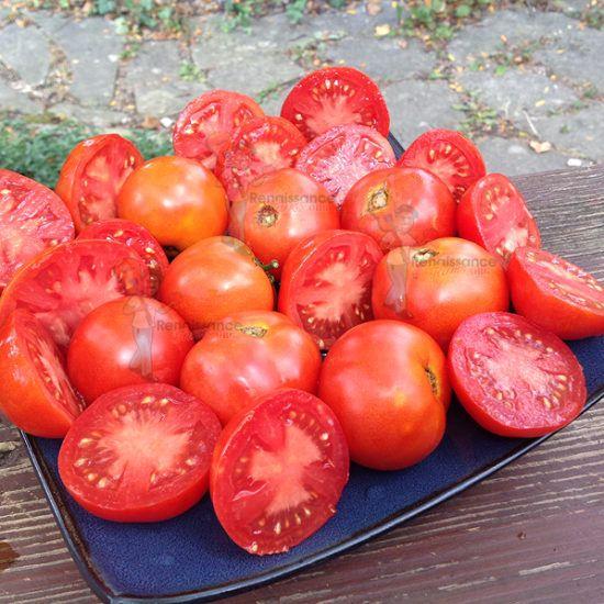 Al Kuffa Dwarf Tomato Seeds Available Visit 400 x 300
