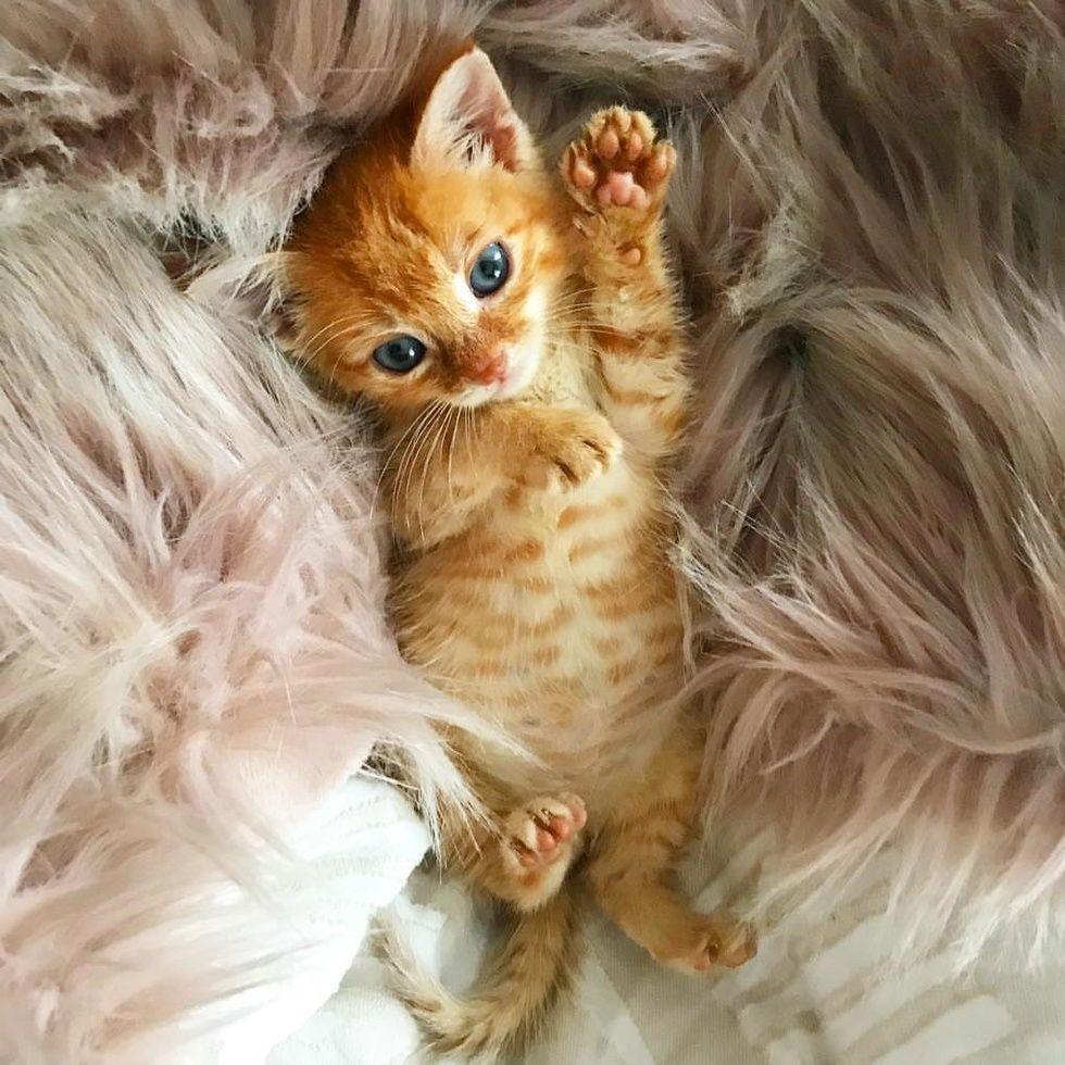Pin By Julianita On Kittens In 2020 Kittens Cutest Cute Cat Gif Beautiful Cats