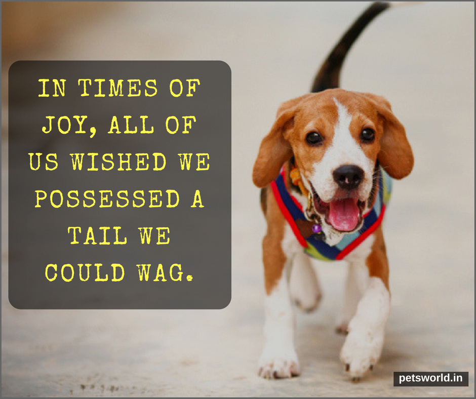 In Times Of Joy All Of Us Wished We Possessed A Tail We Could Wag Petsworld Dog Dogs Dogtraining Cute Cuteanimals Buy Pets Beautiful Dogs Cute Puppies