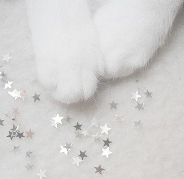 Paws and Stars