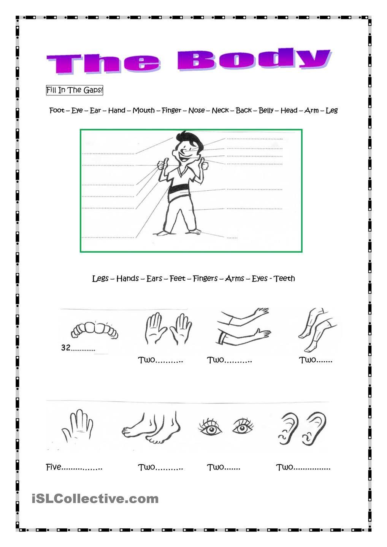 Pin By Reyna Hernandez On Body Parts Pinterest Teaching
