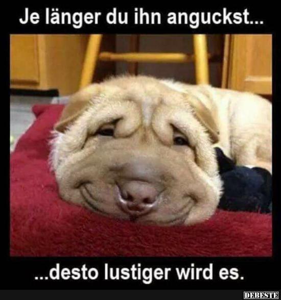 Besten Bilder Videos Und Spruche Und Es Kommen Taglich Neue Lustige Facebook Bilder Auf Debeste De Hier Werden Tagli Lustige Hund Meme Lustig Lustige Minions