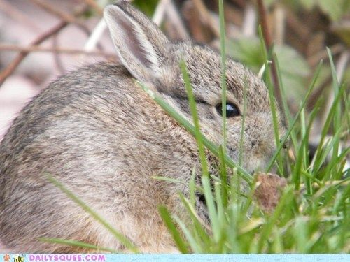 Reader Squees Benny the Bunny Cute animals, Animal