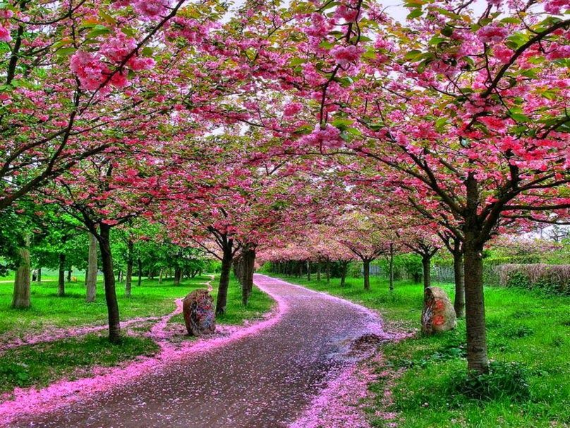imagens de caminhos floridos