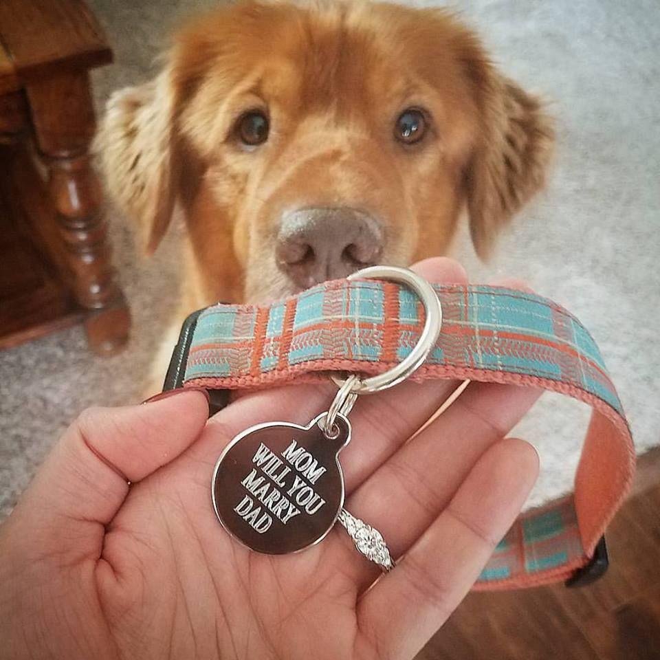 Dog Tag Wedding Proposal Dog Proposal Wedding Proposals Puppy