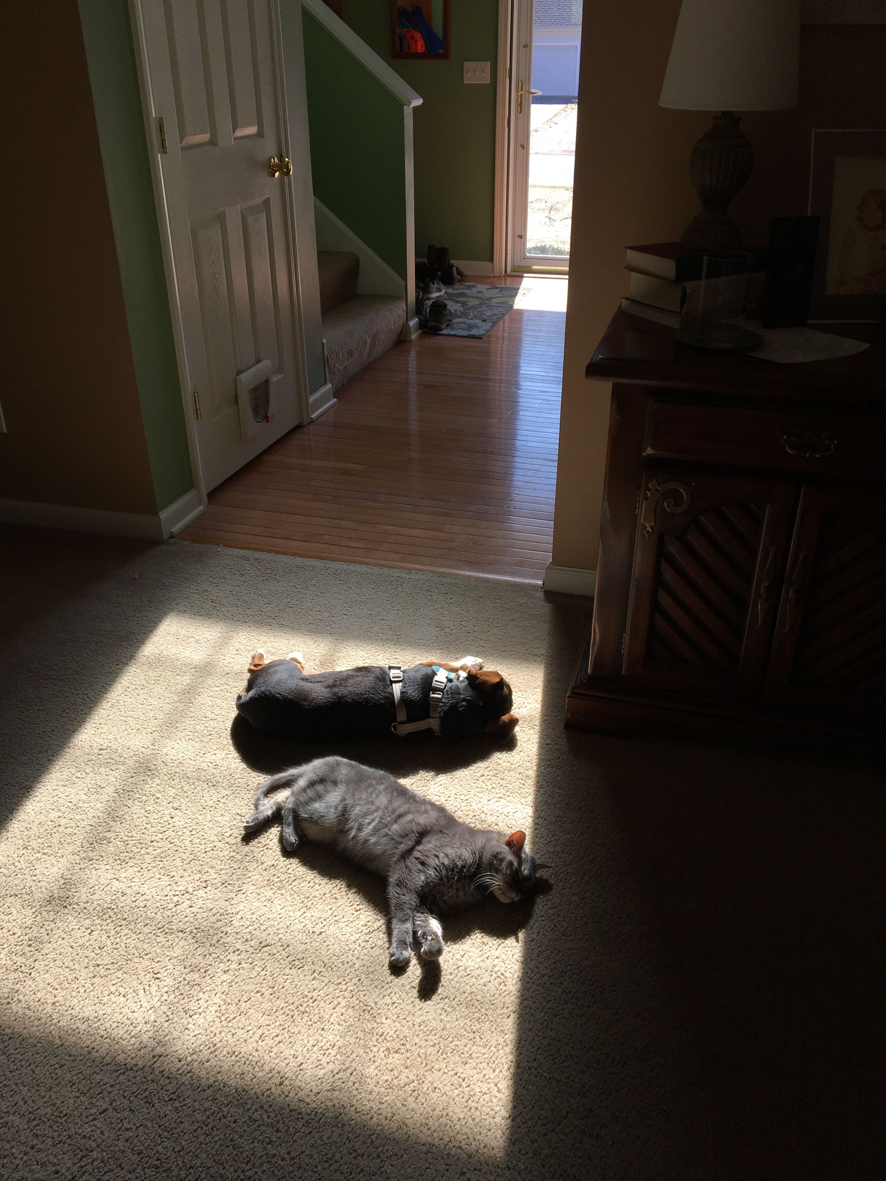 Pin by Kirstie Szlasa on Miscellany Dogs, Animals