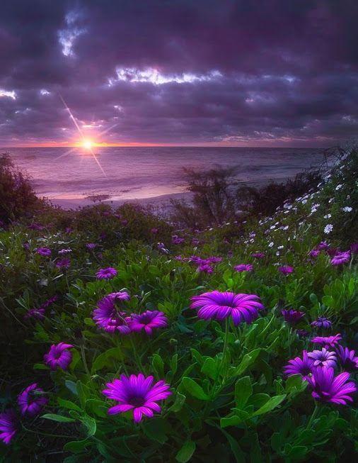 Сиреневый вечер | Натуральный, Фотографии природы