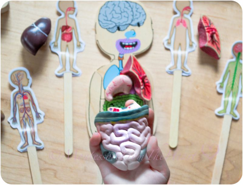 Anatomy Puzzle & DIY Interactive Puppets 🎥 (Inside of the BODY Unit ...