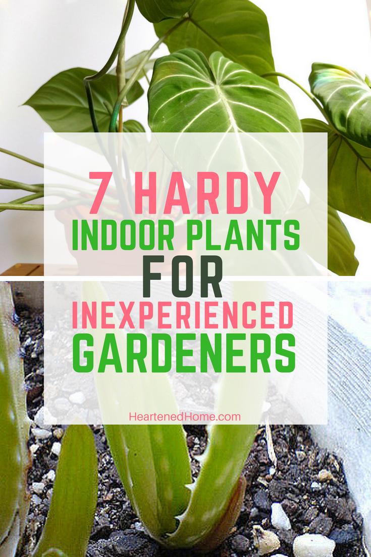 7 Hardy Indoor Plants For Inexperienced Gardeners Indoor 400 x 300