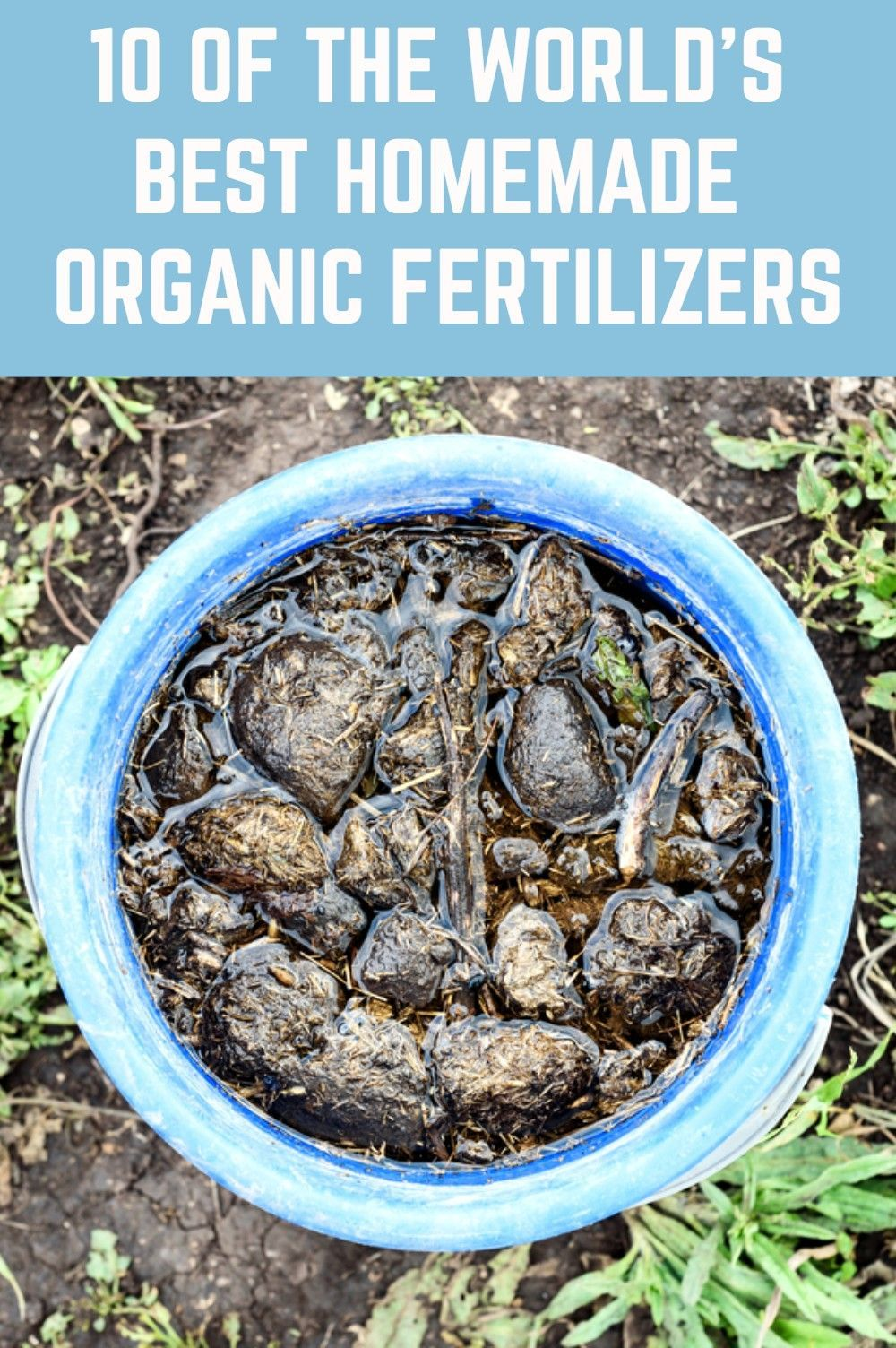 The 10 Best Fertilizers For Fruit Trees 2021 Reviews