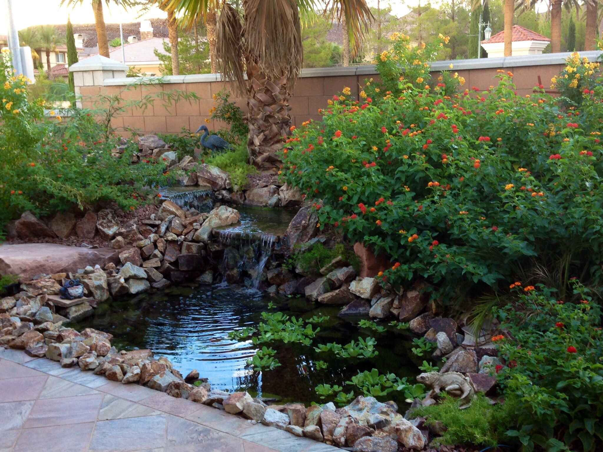 G kelley my backyard pond in las vegas nevada water for Koi ponds and gardens