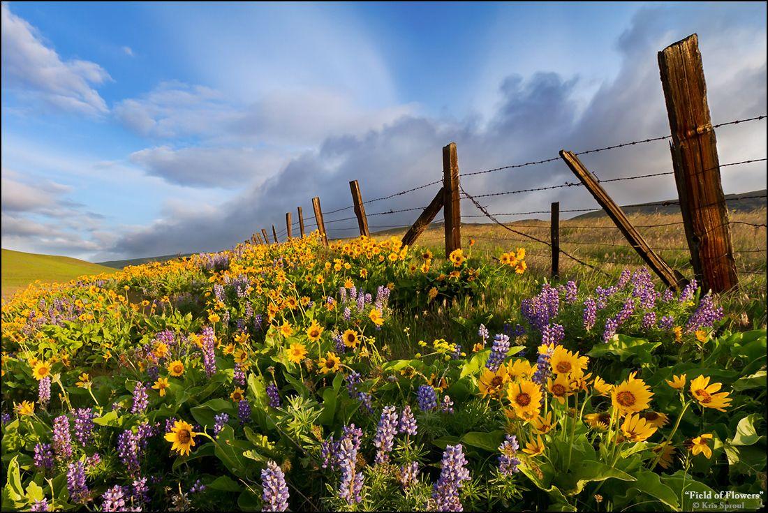 Beautiful field of flowers field of flowers gardensfields 3 beautiful field of flowers field of flowers izmirmasajfo