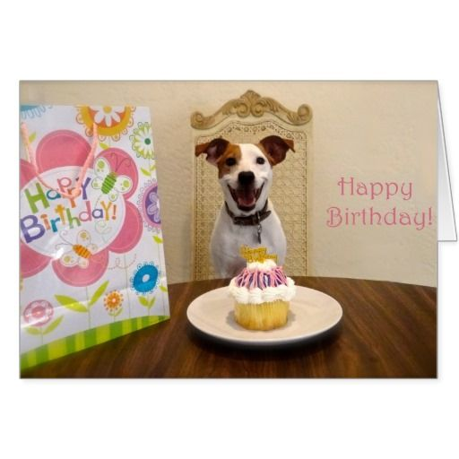 Jack Russell Terrier Happy Birthday Card With Images Birthday