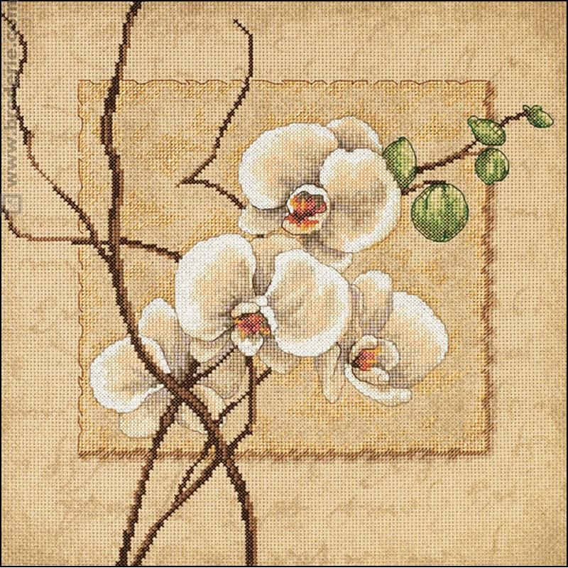 Kit Point De Croix Orchidées Orientales Dimensions