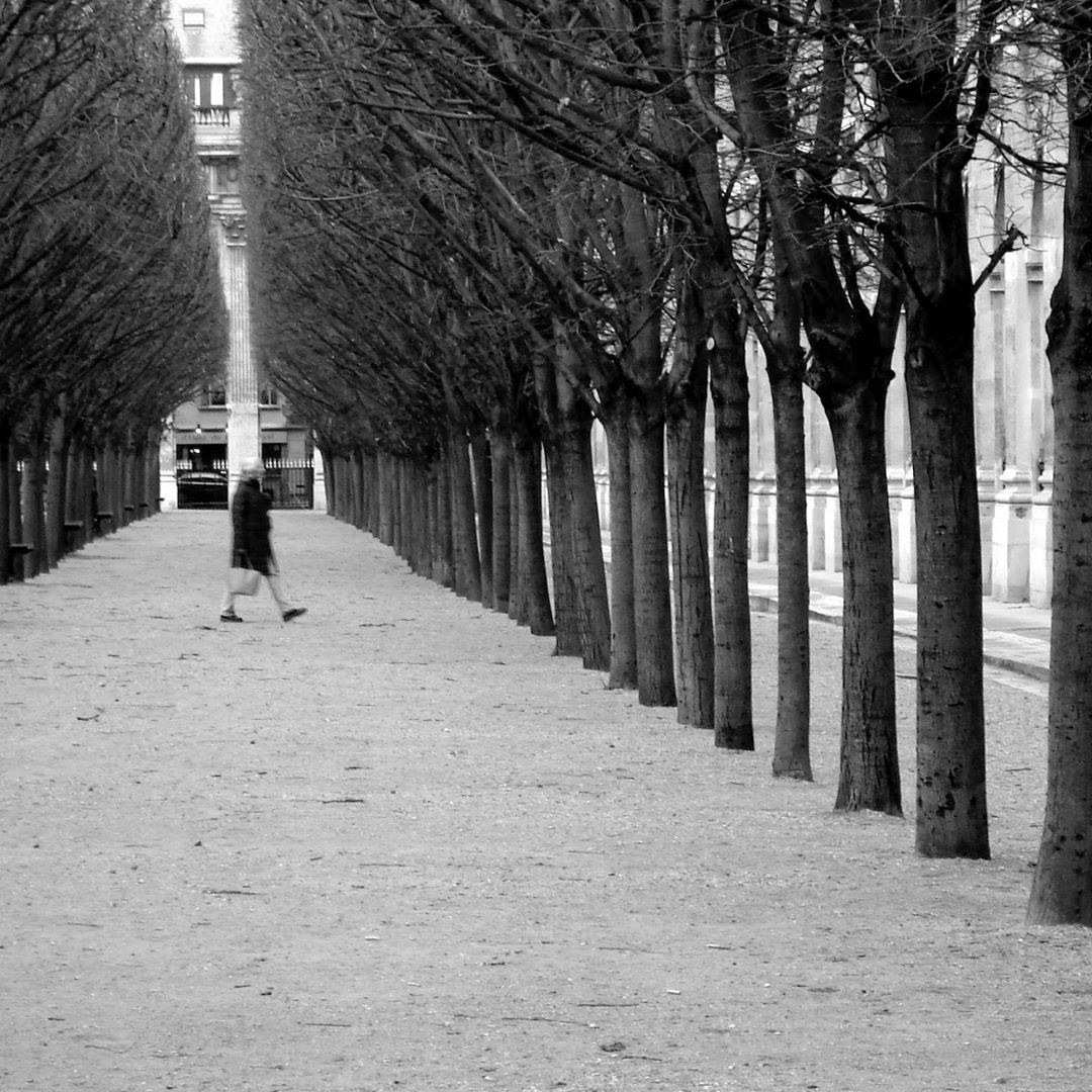 Jardin Du Palais Royal Paris Wonderful Formal Gardens Flanked By Elegant Galleries Containing Some Of The Ci Landscape Structure Landscape Plan Ideal Gardens
