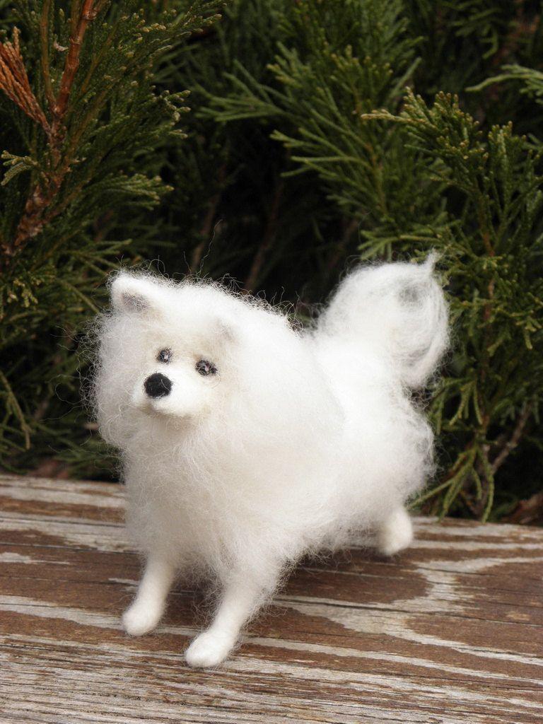 Samoyed Dog Miniature Samoyed Dog Portrait Pets Portrait