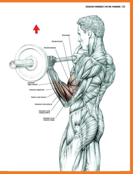 His best-selling Strength Training Anatomy has sold over 1 million ...