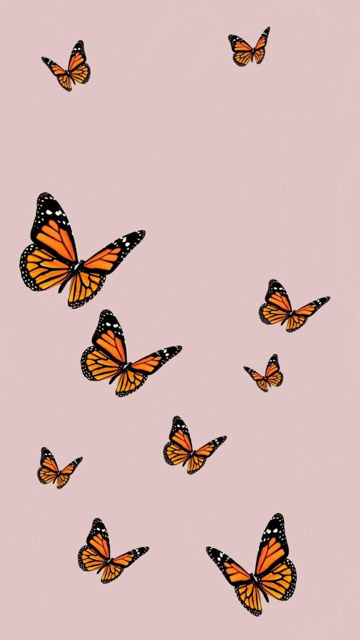 Butterfly 🦋 uploaded by @MarvelousGirl94 on We Heart It