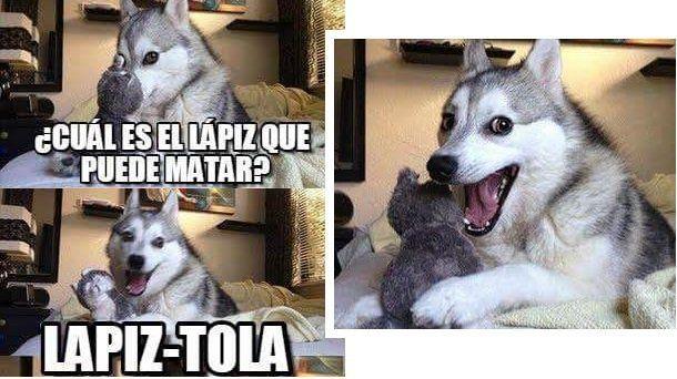 Resultado De Imagen Para Memes En Espanol Chistes Del Perro Husky Memes Perros Memes Divertidos Sobre Perros