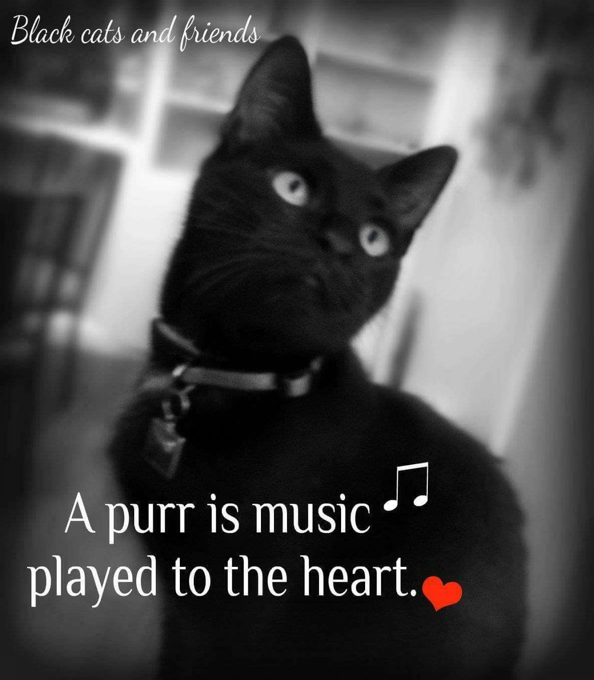 A Purr Is Music Played To The Heart With Images Black Cats Rock