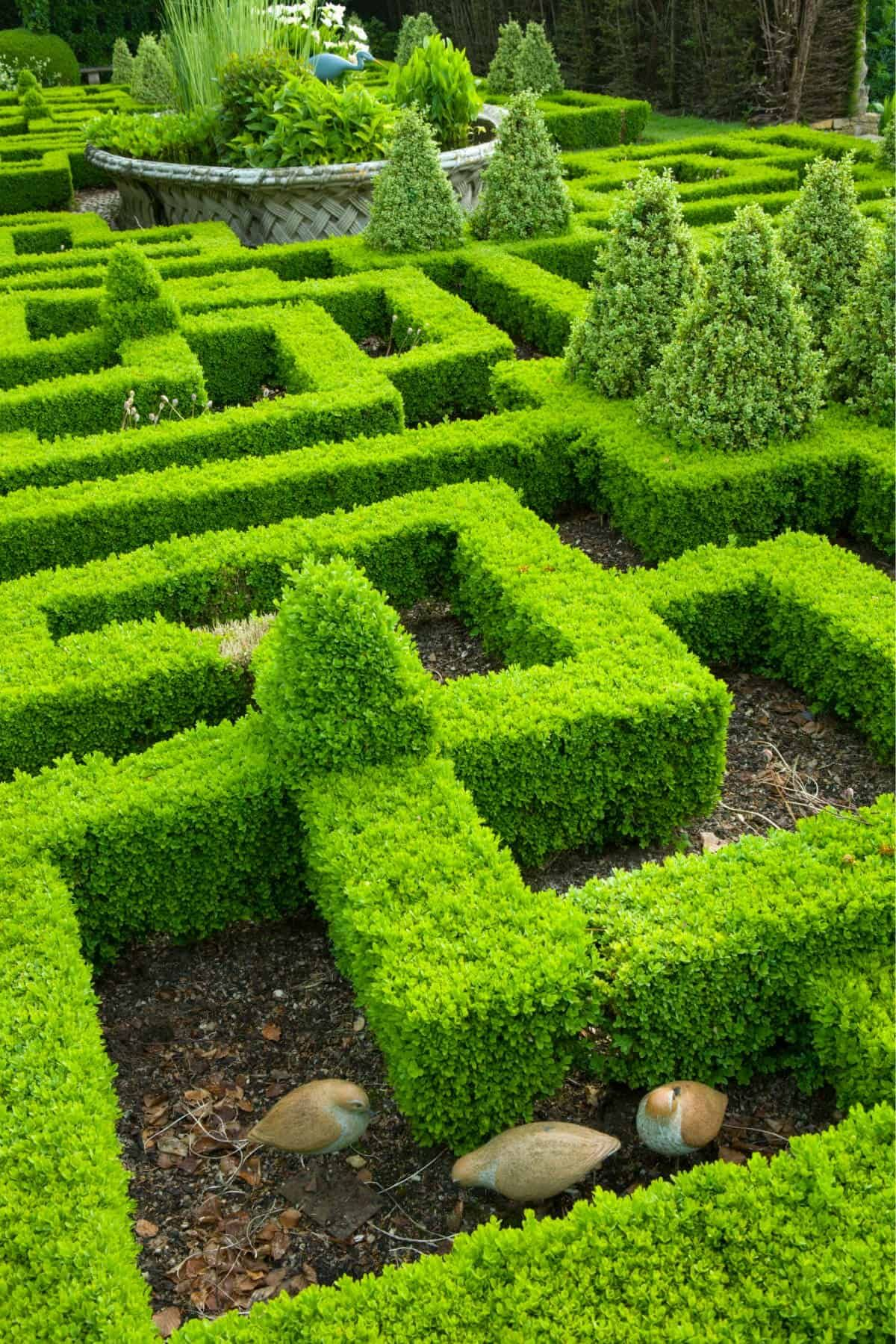 How To Build A Knot Garden 40 Photo Designs In 2020 Topiary Plants Charming Garden Planting Bulbs