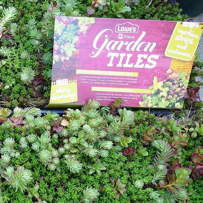 Diy Projects And Ideas Garden Tiles Sedum Ground Cover Sedum Garden