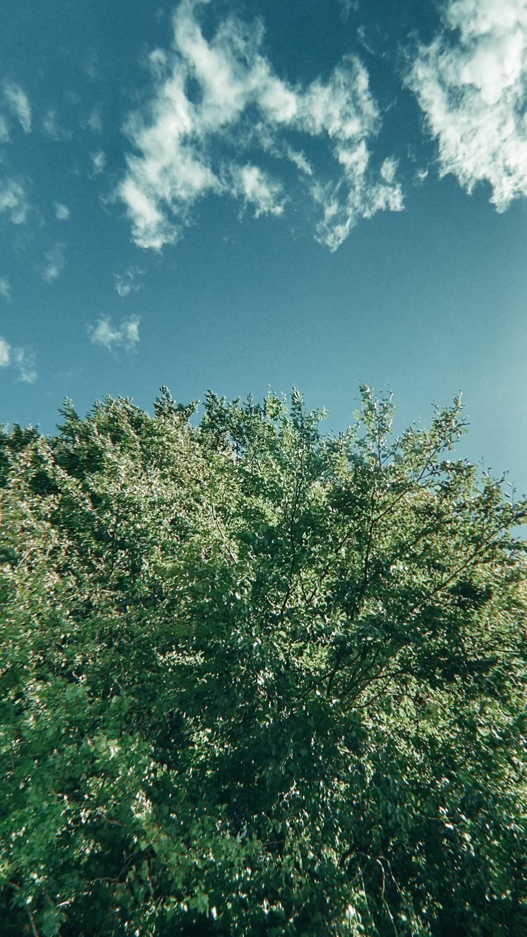 Leaves & Sky