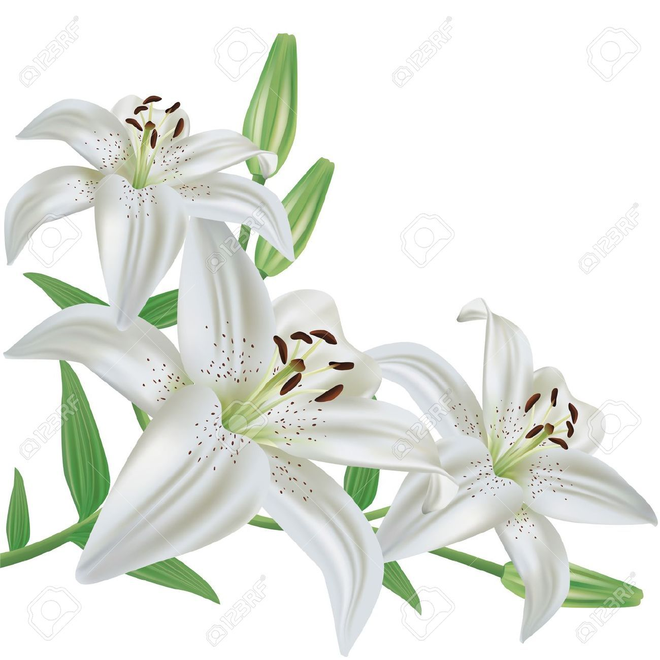 12800000 White Lily Flower Bouquet Realistic Isolated On White