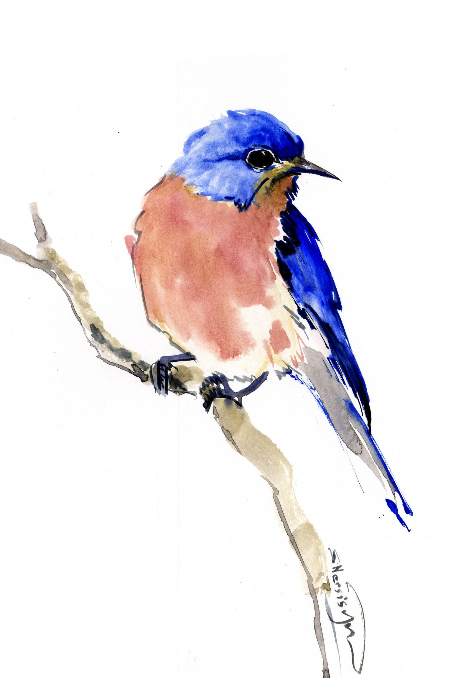 Bluebird Artwork Bluebird And Flowers Original Watercolor