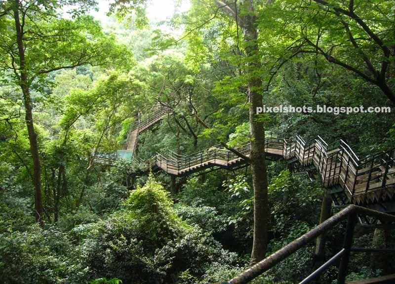 View from top of canopy walkway bridge in Adventure zone Thenmala Kerala & View from top of canopy walkway bridge in Adventure zone Thenmala ...