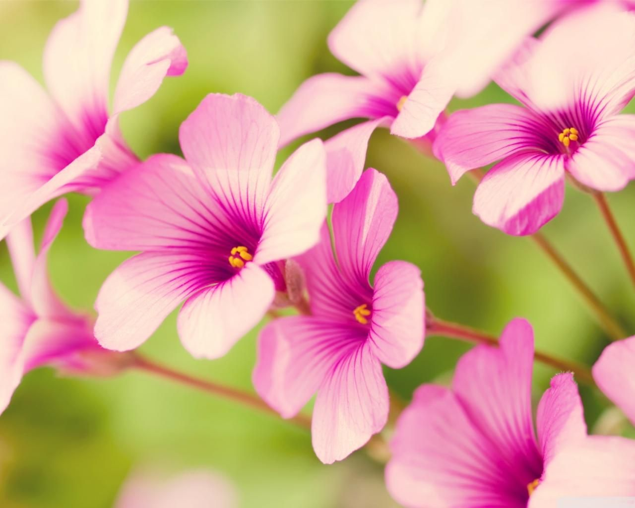 download free flowers - ideal.vistalist.co