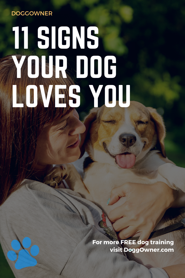 11 Signs Your Dog Loves You (With images) Dog love, Dog