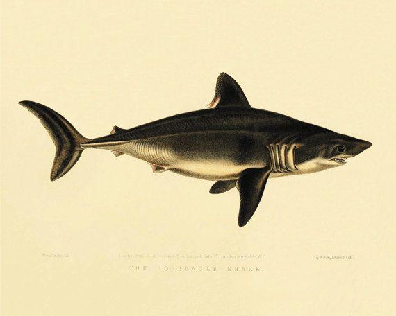 Shark Fish art print Ocean art Sea beach art Victorian print Antique ...