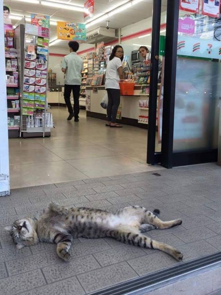50 Funny cats sleeping in weird positions & places in 2020