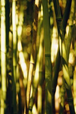 Como Doblar Palos De Bambu Pinterest Como Construir Bambu Y - Palos-de-bambu
