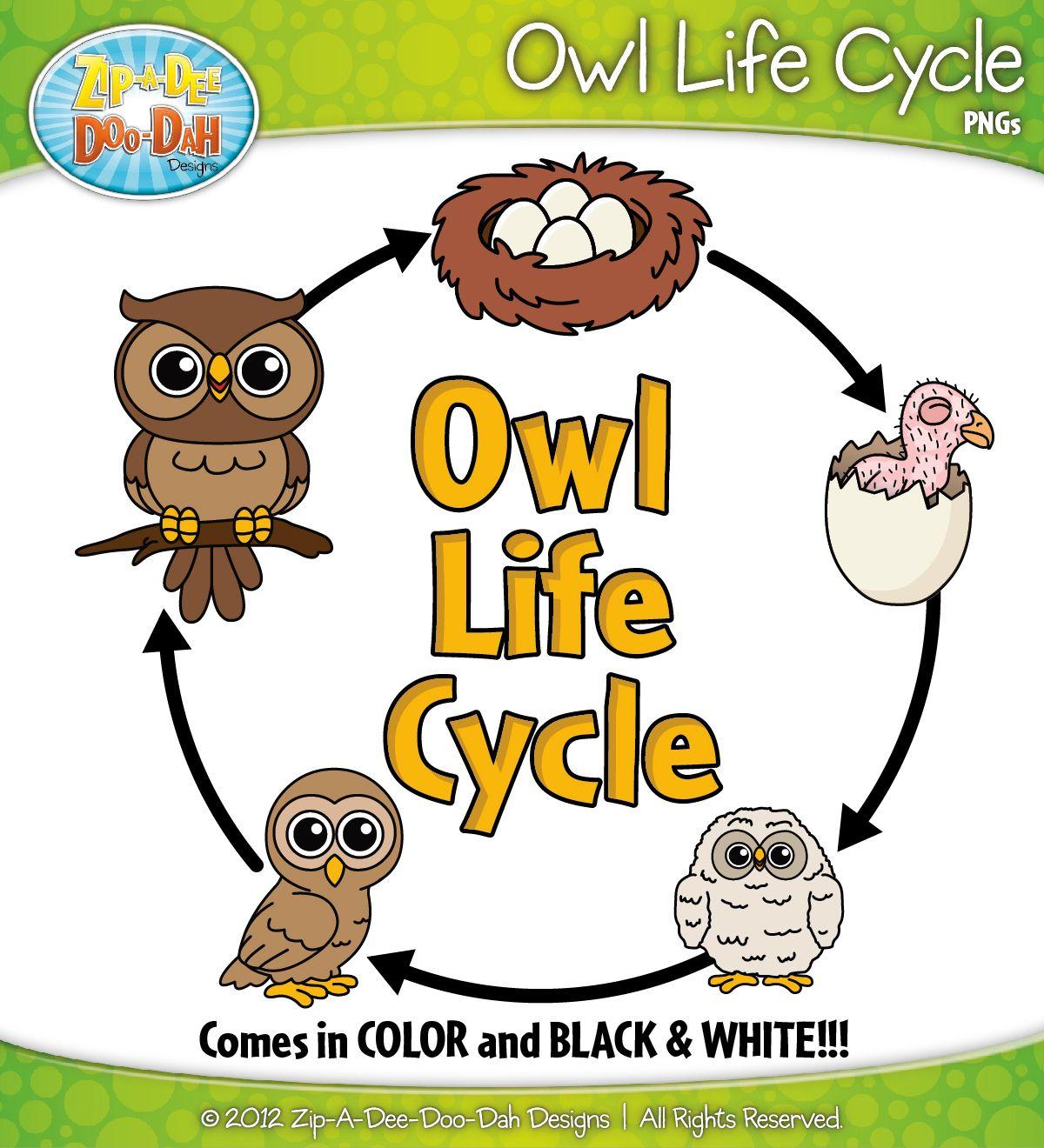 Owl Life Cycle Clipart Zip A Dee Doo Dah Designs With