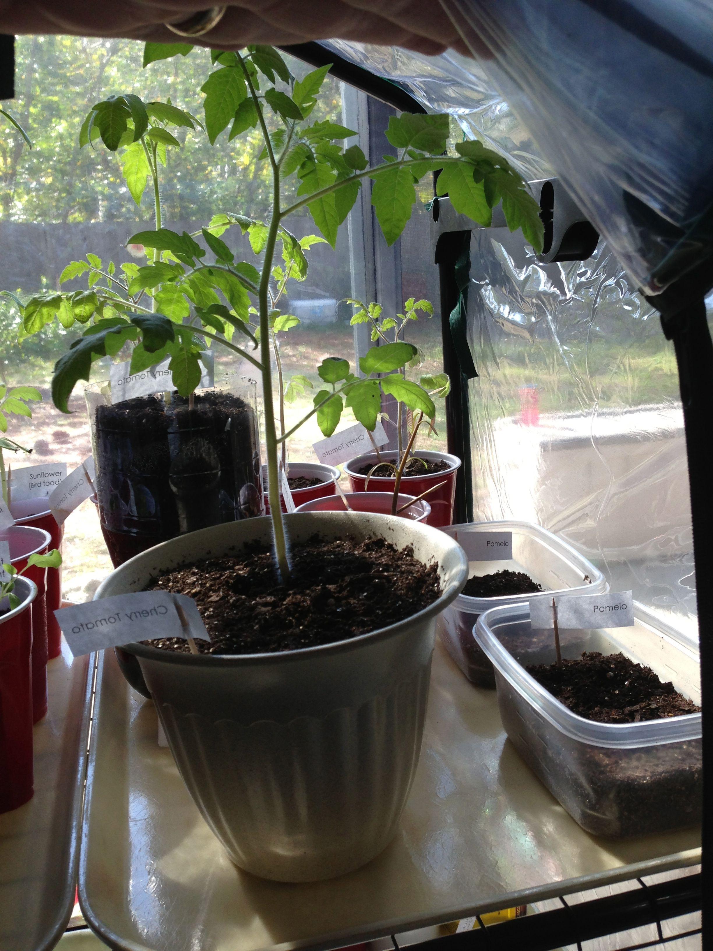 Homemade Grow Tent Grow Tent Plants Growing