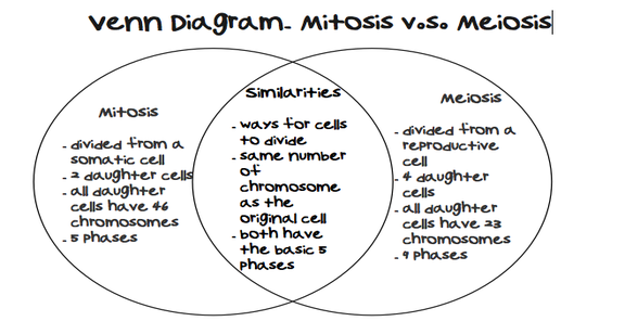 Mitosis vs #Meiosis Venn Diagram Comparing and Contrasting Mitosis ...