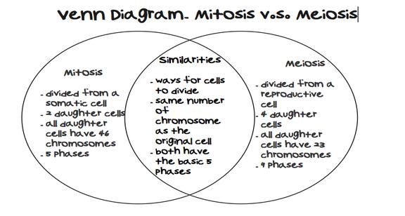 venn diagram on mitosis and meiosis