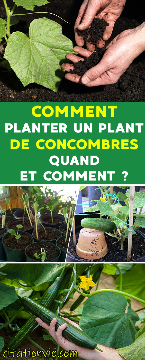 Comment Planter un plant de quand et comment