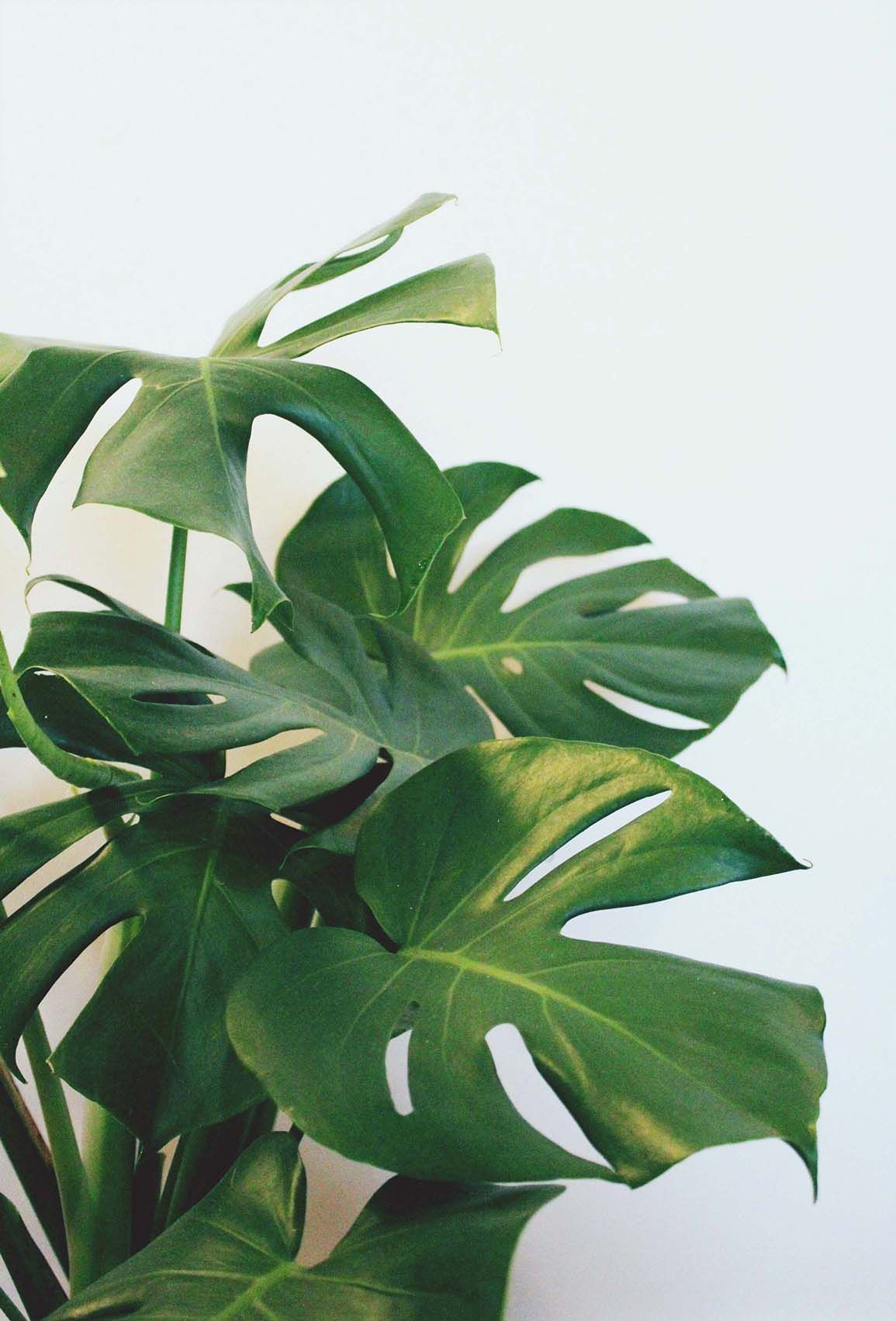 My Pretty Pink Gel Nails: My Pretty Split-leaf Philodendron //