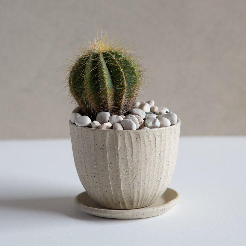 Small Cactus P*T With Saucer White On Stone Macetas 400 x 300