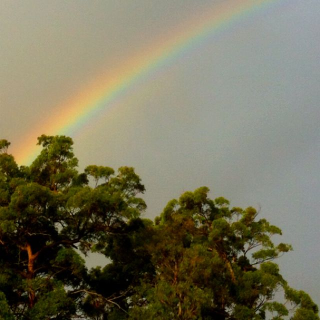 Rainbow over the Gold Coast. Photo by Botanique Flowers Gold Coast #BotaniqueAU www.flowersbytina.com.au