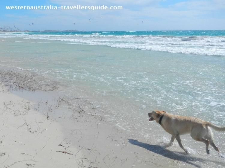 Dog Beaches Perth, Western Australia A Fun Day Out for