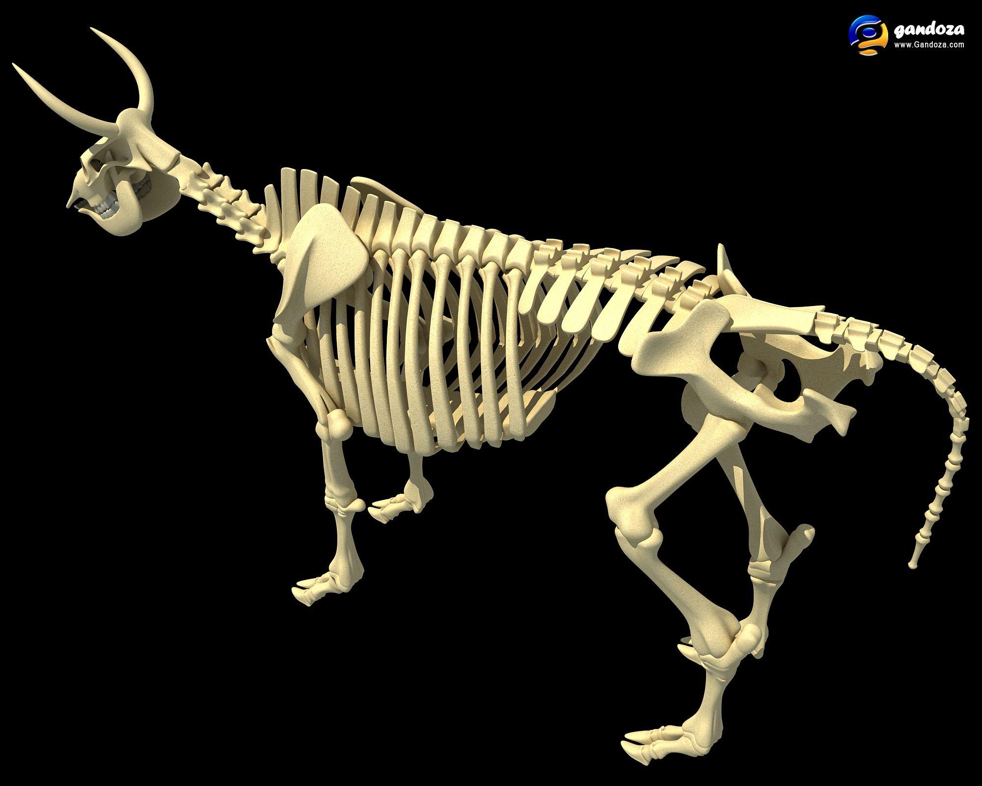 http://www.gandoza.com/ Cow Skeleton | Bones | Pinterest