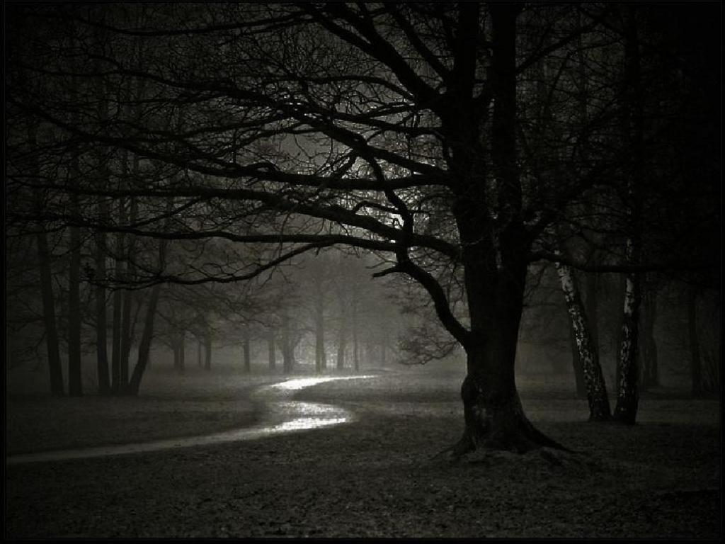 Night Path Images