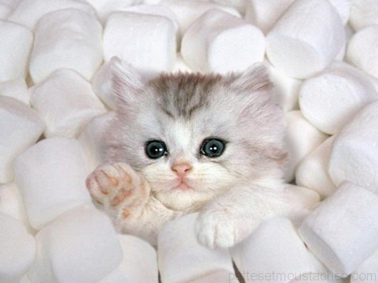 Ohto de chat photo de chatons trop mignon a imprimer - Des animaux trop mignon ...