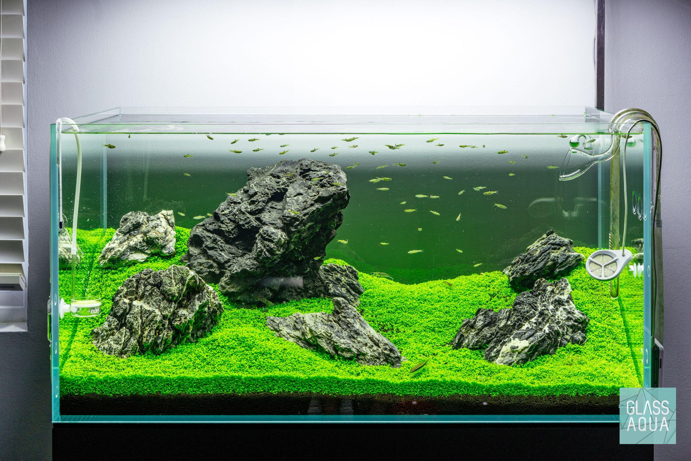Iwagumi Aquascape Planted Aquarium Tank With Added Rasbora Fish